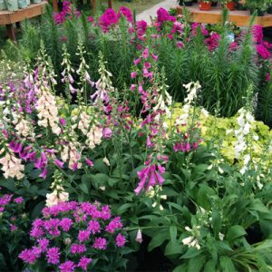Assortment of perennials