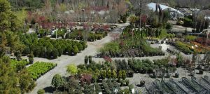 Our tree and shrub yard