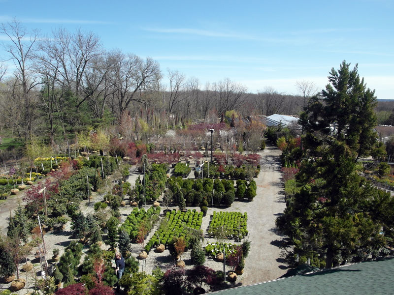 Overhead view of part of the shrub selection