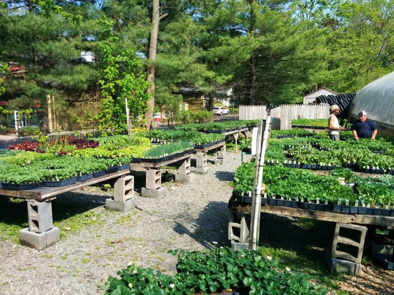 A huge selection of vegetables