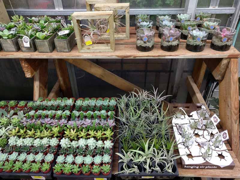 Small Succulents Tillandia and Cactus Plants