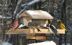 Birds eating seed at a feeder in the snow