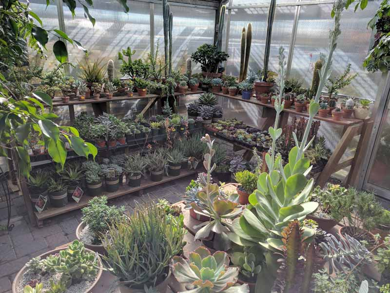 Cactus and Succulents in a Greenhouse