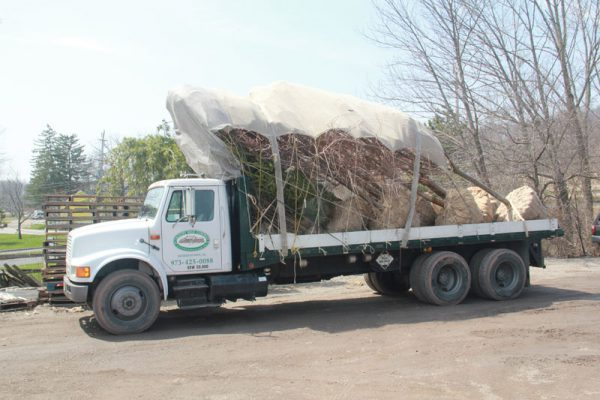 flatbed loaded with large trees