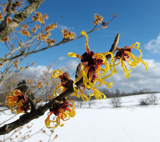 Vibrant colored flower blooms in winter